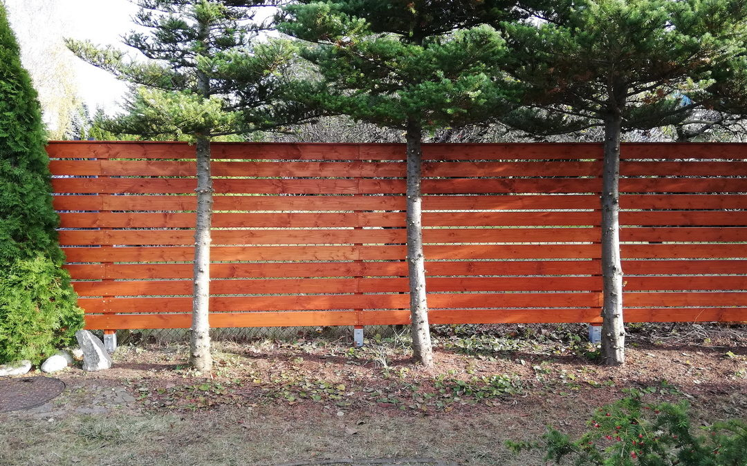 Ogrodzenie – świerk skandynawski